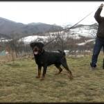 Bronco (Jessy Mediguard & Erlo Mediguard) Owner Eugen Corciu