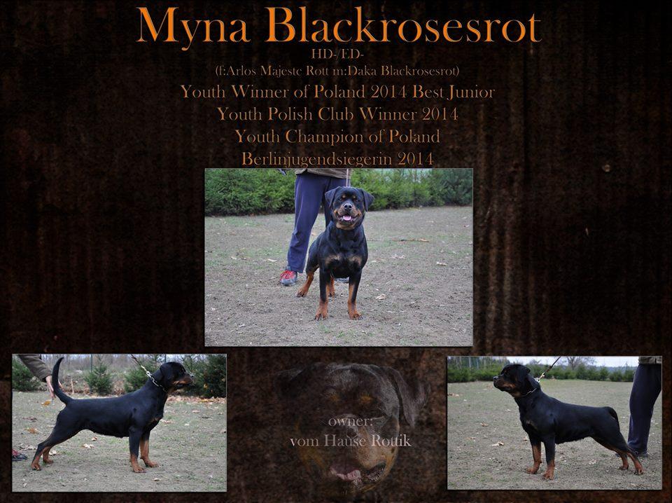 Myna Blackrosesrot