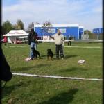 Ciquita - RKC Arad 2010